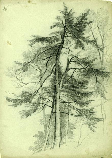 AsherDurandStudyofTrees
