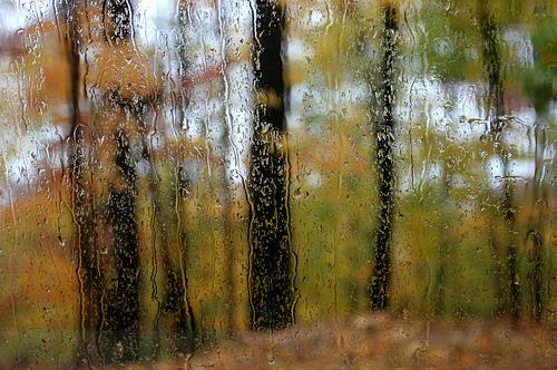 Rainwoods