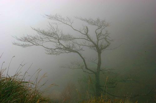 Treeinthewindbyphotocello
