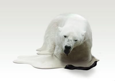 Polar_fin