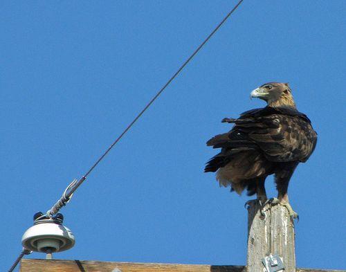 Eagle-2-20-13-thumb-600x472-45661