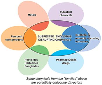 Endocrine disrupting EDC-figure