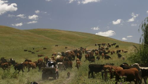 Morris_Ranch-e1414540931508-680x388