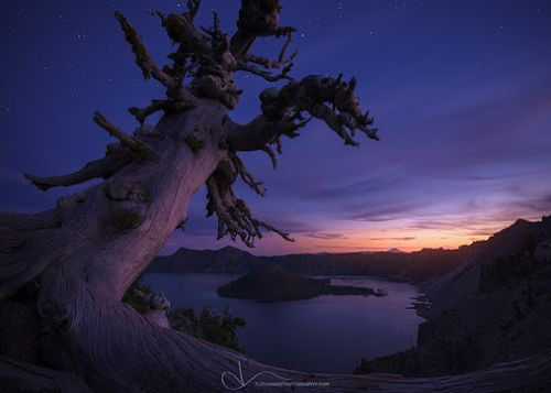 Deadtreeatcraterlake
